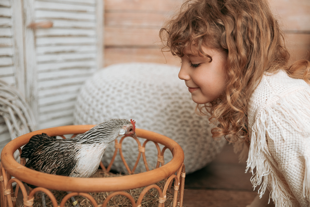 Zwerghuhn Hühner Foto mit Kind Ostern Bildgefühle Odenwald