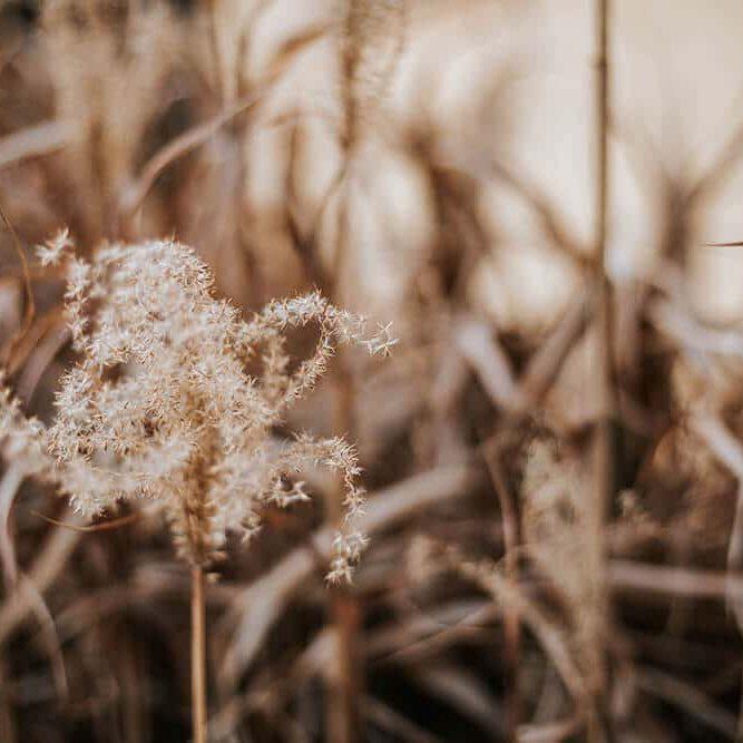 Coachingprogramm Bildgefühle Natürliche Fotografie